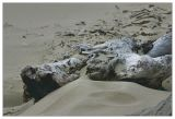 Siuslaw River Jetty Sand Dunes