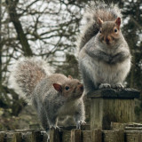 2013Jan - Two optimistic squirrels