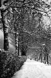 Cold Silence 01