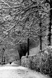 Cold Silence 04