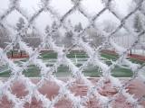 Fences 2963
