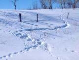Fence 4017562
