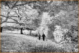 Ireland - Co.Westmeath - Belvedere House and Gardens - Infra Red