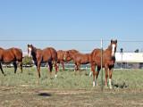 Horses along the way
