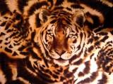 Tiger Silk Scarf