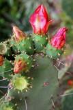 Macros/Flowers/Plants