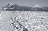 Looks like  tracke to Mount Rigi