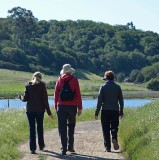 Three of our Walkers