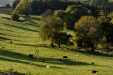 cowscape 3
