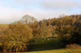 sheep in leafless trees
