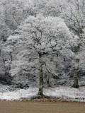 defining trees