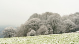 maybe last snowy trees