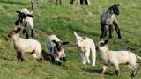 skip like lambs