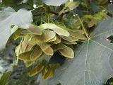 2006-08-30 Seeds