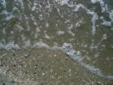 Salt water in Adriatic sea, Velipoja beach