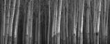 The Poplars..