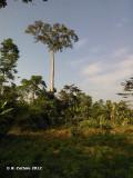 Atewa Hills