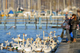 Kids feeding the swans