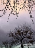Fall Season 2012