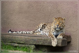 Janne's Olmense Zoo