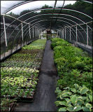 Spring - Hostas, Ferns