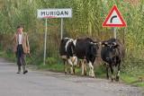 Herdsman pastir_MG_5187-11.jpg