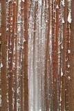 Winter in the forest zima v gozdu_MG_0716-11.jpg