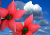 Cyclamen and sky (3190)