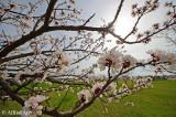 Spring at the Wachau