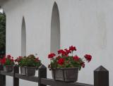 Church geraniums