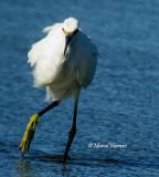 Echassiers et oiseaux des marais