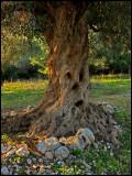 Olive Tree Creature.jpg