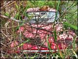 Cat sleeps on Abandoned car