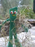 Gumby models a swath of lichen