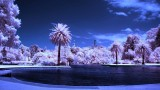 Botanic Garden, IR