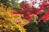 Best of Tokyo, Nikko & Kyoto