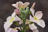 AZ - Rain Drop Flower.jpg
