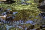 Stream potok  dsc_0875Nzpb