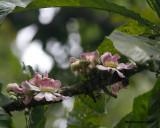 _MG_5245_flowering tree.jpg