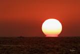 FISHING TOWARDS THE SETTING SUN. A lone fisherman tries his luck near the seashore at San Juan, La Union, as the sun sets in the western horizon.   Shooting Info - San Juan, La Union, November 30, 2012, 1DM4 + 500 F4 l is + 1.4X TC II, 700 mm, f/11, ISO 200, 1/125 sec, 475B/516 support, color version.