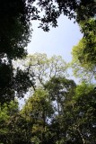 Looking up in Khao Yai National Park