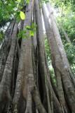 Khao Yai National Park Jungle
