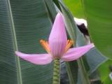 Baan Saranya Lodge Flowers