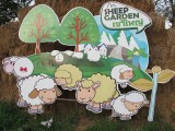 Pak Chong Sheep Garden