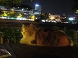 Foo the cat