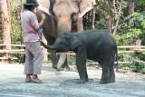 Chiang Mai Zoo baby elephant