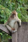 Fetid Khlong Monkey