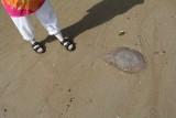 Pai Plong Bay Beach Jelllyfish