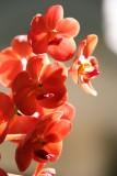 Golden Beach Resort orchid