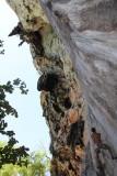 Phra Nang Beach Rock Climbing